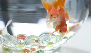 KROK IV -Zakup i wprowadzanie ryb